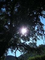 Solar phosphenes